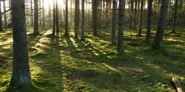 Så sköter du din skog klimatsmart