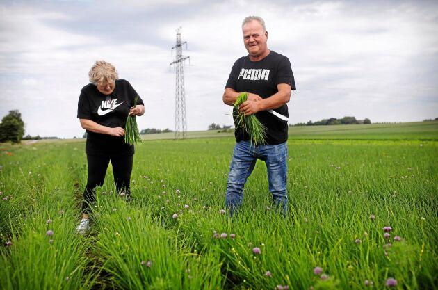 Jan och Beata Krupa har säsongsarbetat på gården i nära 40 år. Här plockar de gräslök inför midsommarveckans stora beställningar.