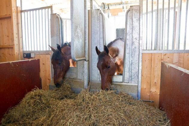 Sedan 1 mars gäller nya föreskrifter för hästhållning. Den 1 juli ska Jordbruksverket ha lämnat sin utredning om att hålla djur uppbundna till Näringsdepartementet.