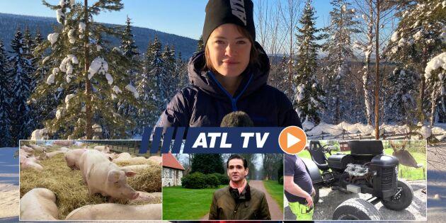 ATL TV: Grisgården byggde fläskomat