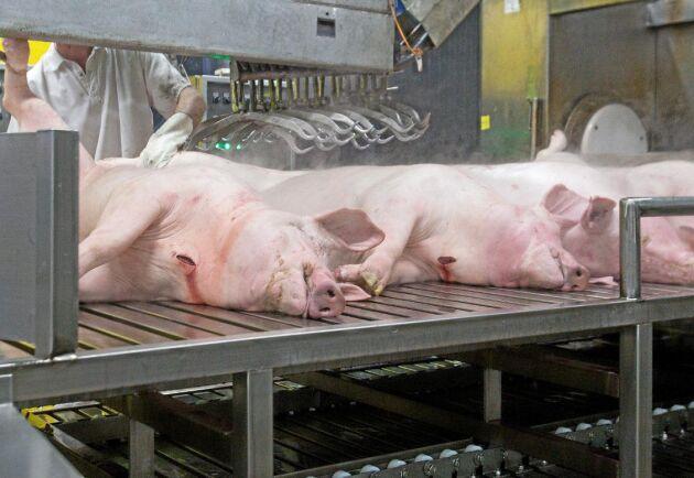 Svenska grispriser har legat över EU-genomsnittet, men nu har andra länder högre betalning.