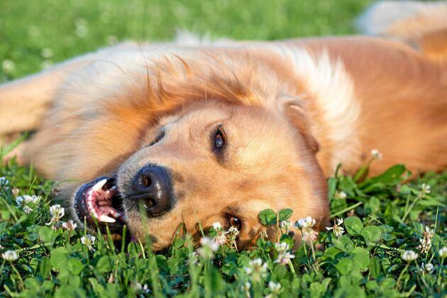 Fråga dig inte bara vad en hund kan göra för dig utan också vad du kan göra för den.