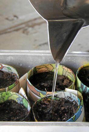 Håll fukten. Annars kan ett spirande frö ge upp redan i starten.