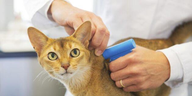 Id-märk och registrera din katt