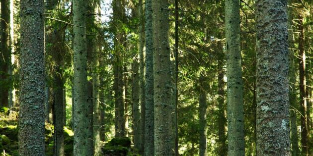 Dra åt skogen – då blir du lyckligare