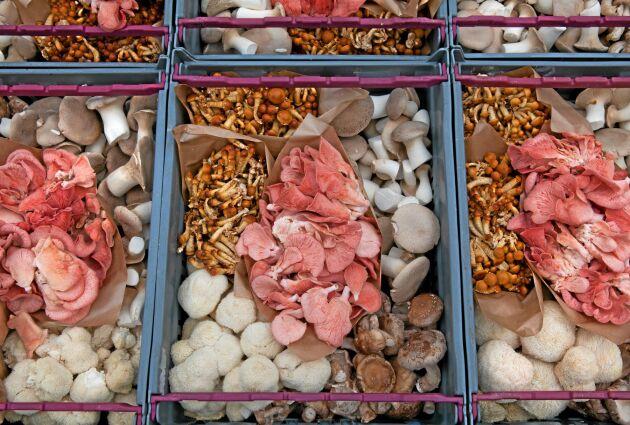 Exotiska svampar på väg till kund.