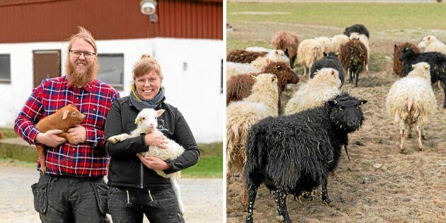 Det myllrar av liv på Hamragård hos syskonen Johan och Camilla