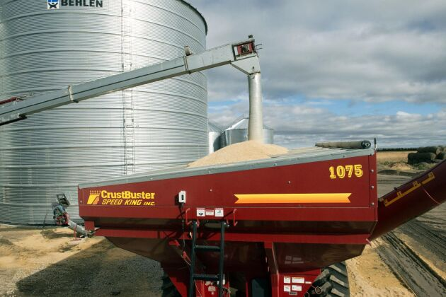 Få lyckas odla majs framgångsrikt på den torra höglandsslätten. Bröderna Linnebur har gjort det genom att dubbla avståndet mellan raderna så att rötterna kan suga upp mer fukt. Nu ska majsen lagras i silo.