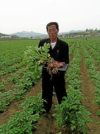 Skörden av potatis är låg på grund av brist på utsäde och insatsmedel samt ålderdomliga brukningsmetoder.