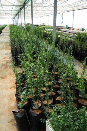 Ur landets problem att mätta befolkningen kom initiativet Gröna Marocko, ett initiativ som mött stor framgång och nu kopierats av 14 andra afrikanska länder.