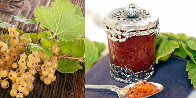 Sommarmarmelad med vita vinbär och citron