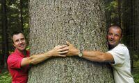 Trä får oss att må bra