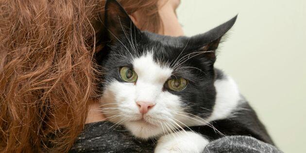 Så ger du katten ett (ännu) lyckligare liv!