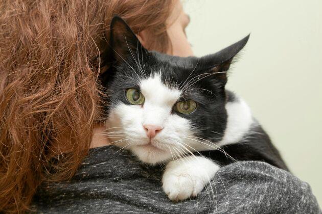 Ge tid för guldstunder med din katt. Närheten gör er bägge starkare.