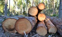 Mellanskog höjer och sänker