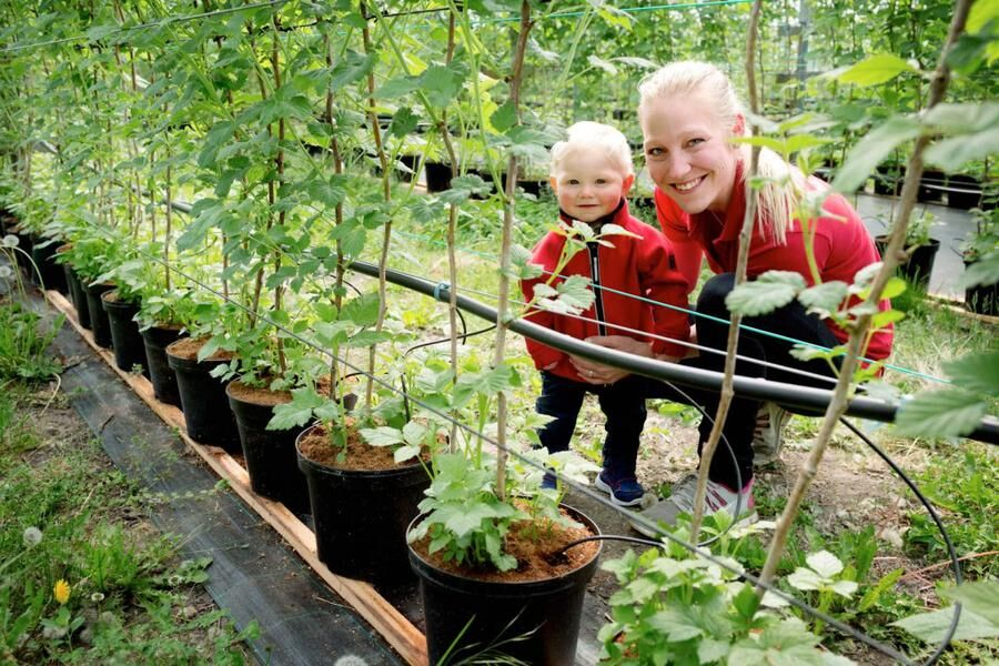 Land.se skriver om familjen Biärsjö som driver prisade Hallongården i skånska Bodarp.