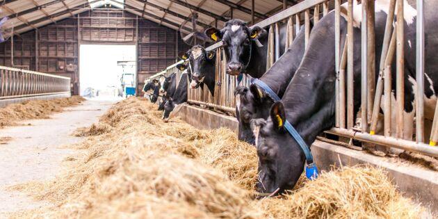 Norrmejerier höjer mjölkpriset