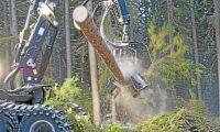 Hotar med bojkott av svenska skogsprodukter