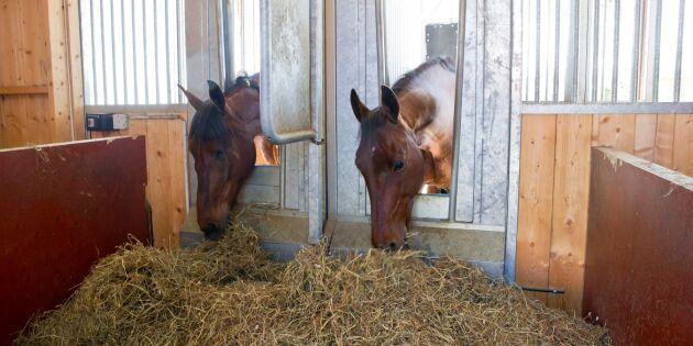 Ny dom – lättare för hästföretag att bygga
