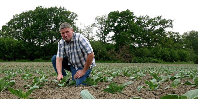 """Spontan satsning på grönsaker: """"Måste våga chansa"""""""