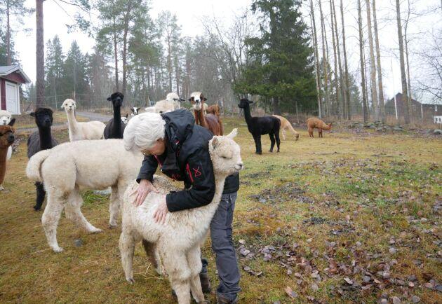 Catrine Åsén kikar på ullen hos ett föl.