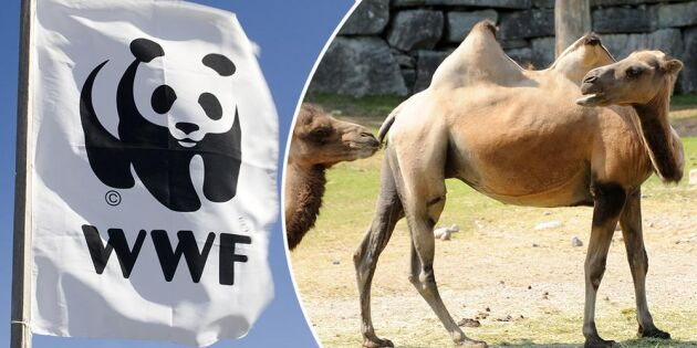 """""""Miljörörelsen silar mygg och sväljer kameler"""""""