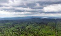 Stora prisskillnader mellan olika sajter för skogsfastigheter