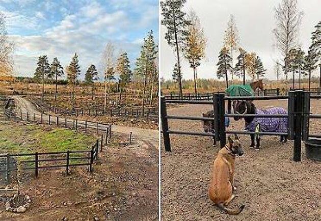 Totalt har hästarna cirka 3 hektars hagyta att röra sig på. När marken blöt och känslig kan hästarna gå i grushagen (bilden till höger), som är tillräckligt stor för fyra hästar.