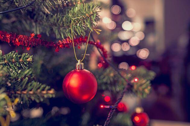Allt började med ogräs bland julgranarna.