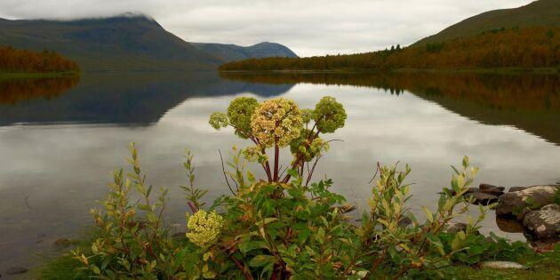 Växter från norr grunden för ny bransch