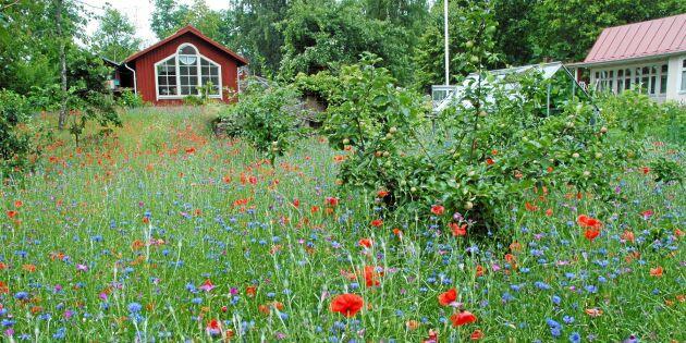 GUIDE: 4 blommande alternativ till gräsmatta – vilket passar dig bäst?
