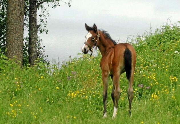 Ingrid säljer många hästar till både elitryttare och amatörer över hela landet och även utomlands.