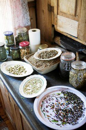 Frön från kulturväxter som dalavet sparas till nästa års odling.