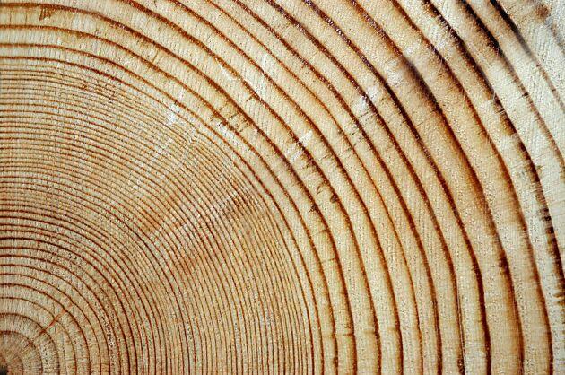 Med magnetresonans kan trädets årsringar undersökas för att bedöma hur mycket koldioxid trädet har och kommer att ta upp.