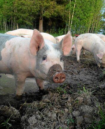 Djurvänner Helena Vestin och Per Jonsson vill ge sina djur ett så bra liv som möjligt.