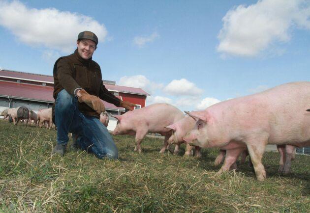Halla Gård sluter kretsloppet i sin grisuppfödning med hjälp av framtidens stall.
