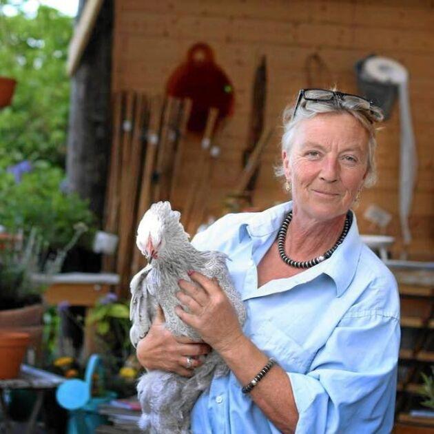 Tina-Marie Qwiberg tvekade inte utan plockade med sig den övergivna kråkungen och lät henne flytta in bland hönsen.