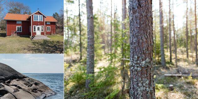 Gräsö Skogar till salu för 100 miljoner