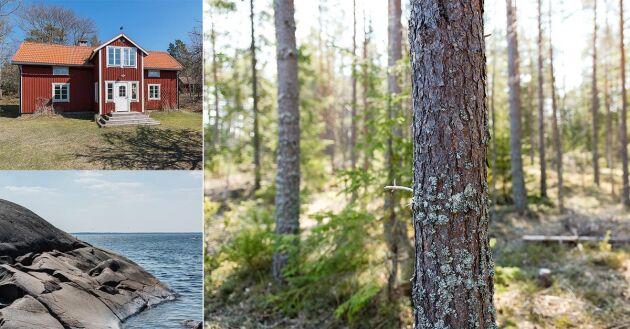 Gräsö Skogar erbjuder en framtida skogsinvestering såväl som vacker natur och jaktmarker. Området kännetecknas av en omväxlande skärgårdsnatur med täta produktionsskogar och kuperade marker.