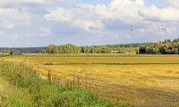 Torkdrabbade finländska bönder hotas av utmätning
