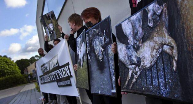 Tyst demonstration. Stödet för de två åtalade aktivisterna var stort när rättegången hölls i Nyköpings tingsrätt. I rättssalen blev svensk köttproduktion en slagpåse.