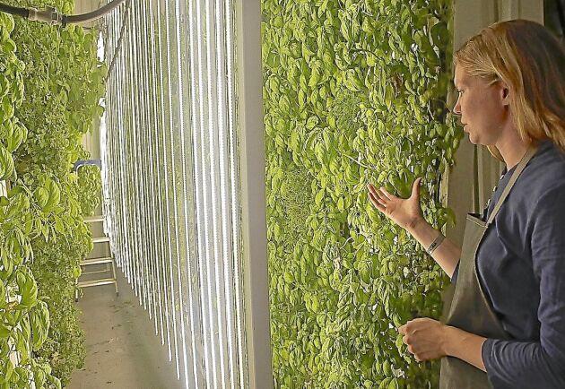 Ellinor Helgessons specialdesignade växthus ska hålla samma klimat året runt.