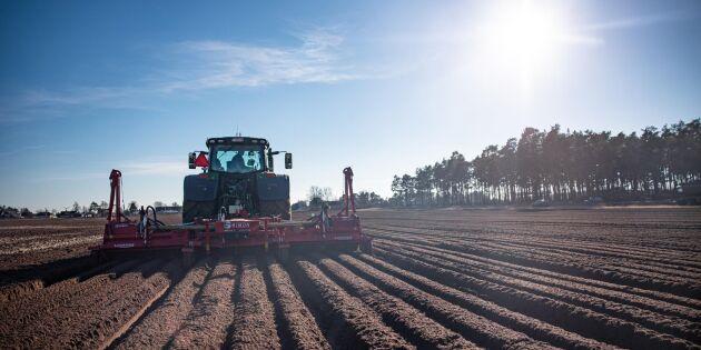 ATL TV: Vårbrukspremiär för morotsodlare