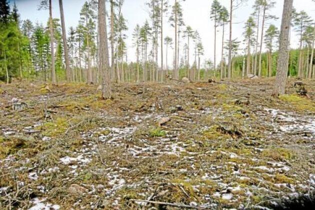 Så här såg det ut på ett av skiftena i skogen som ägs av Emådalens Naturskyddsförening.