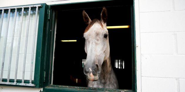 Entreprenörsprojekt ska lyfta hästnäringen
