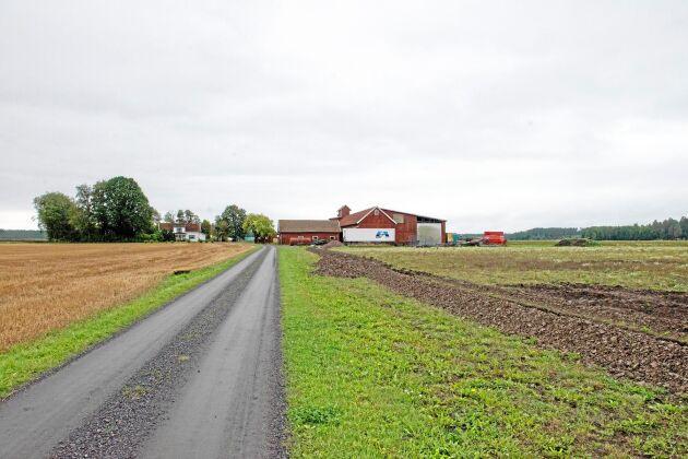 På föräldragården Plan, Tengene, utanför Grästorp odlar Göran Andersson hampa sedan många år.