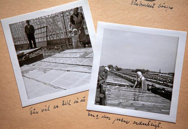 Ingmar Nilssons föräldrar odlade meloner i drivhusbänkar byggda av gamla fönster.