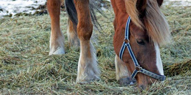 Vinterfodret stulet från hästgård
