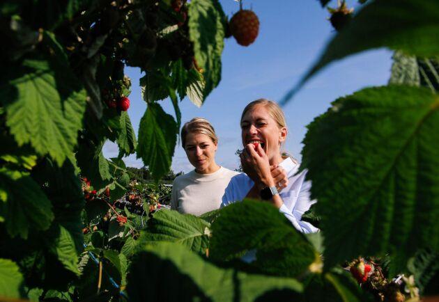 Gott med bär. Systrarna Alexandra (till vänster) och Madeleine Nilsson har nära till skratt och bus ihop. De har aldrig ätit så mycket hallon och jordgubbar som i år.