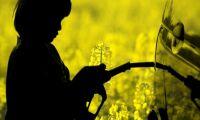 Allt fler använder HVO-biodiesel